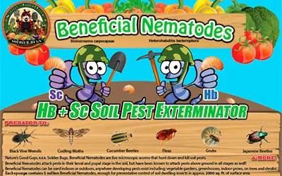 Beneficial Nematodes Flea exterminator