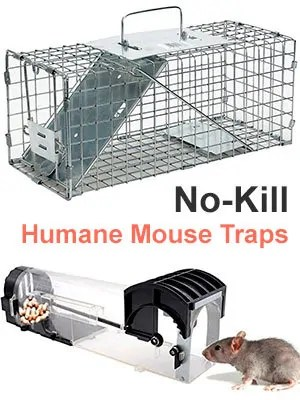 No-Kill Humane Mouse Traps