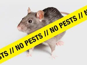 No rats No pests