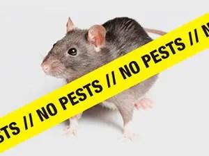 No rats No pests
