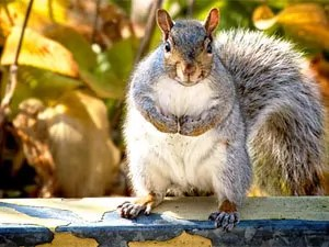 Preventive mesures to control squirrels in attic