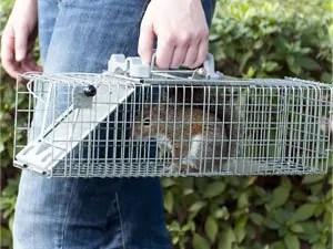 One door animal trap