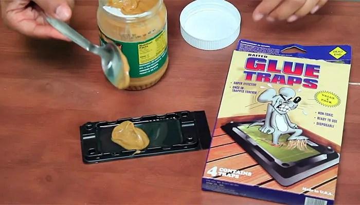Peanut butter for glue trap