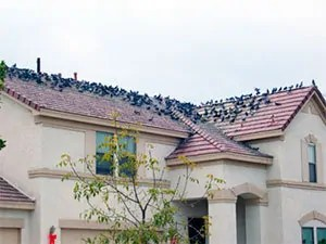Effective Information On How To Get Rid Of Pigeons