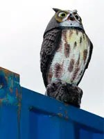 Fake Plastic Owl Bird Deterrent