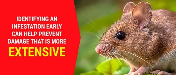 Prevent mice damage