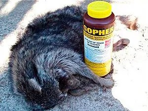 Raccoon methods of killing with traps and poison