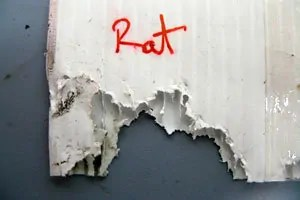 Rat Damage