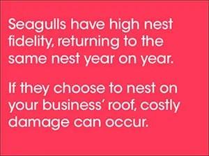Seagulls basic information