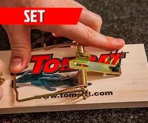 Set the Tomcat