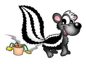 Skunk smell removal tips