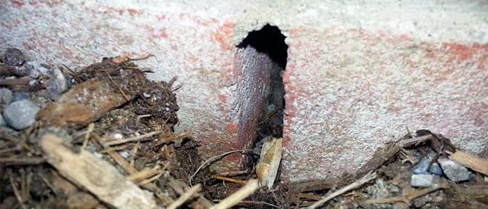 Do Need Hole Mice Big How
