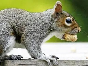 How to deter squirrel from garden