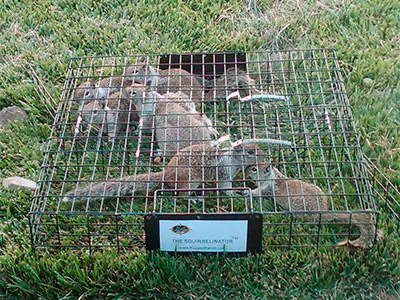 Squirrelinator Trap 100063928 by Rugged Ranch