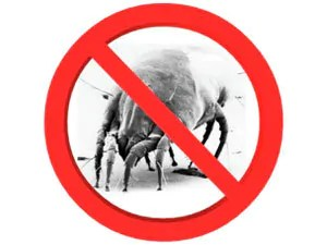 What about dust mites infestation