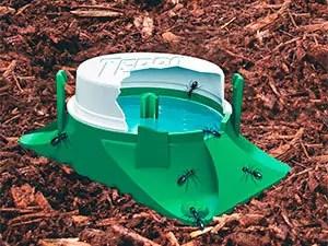 Terro trap for ants