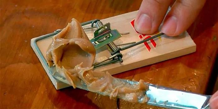 Prepare the trap win peanut butter