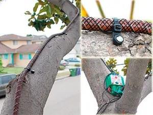 Tree-Shock system