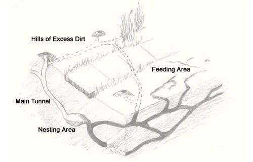 Moles tunnels