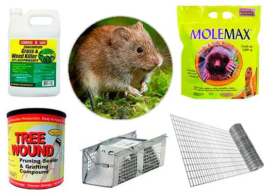 Vole removal methods