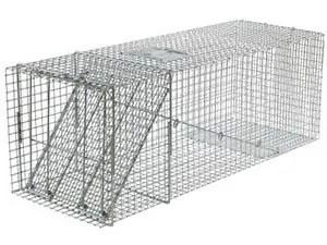 X-Large 1-Door Trap