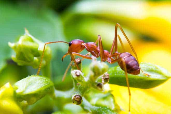 One Massive Group Of Ants Has A Secret Supersoldier Programme That S Been Locked Away For 35 To 60 Million Years