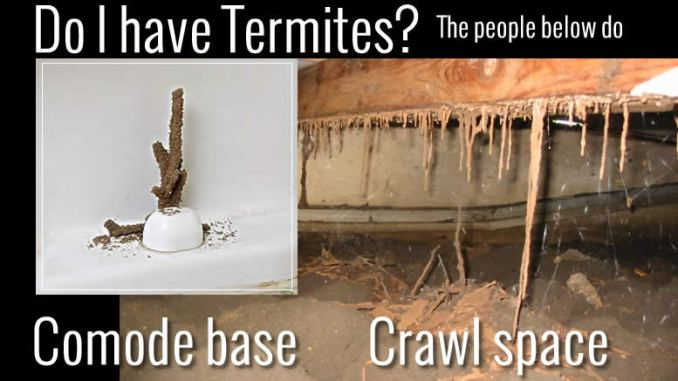 Do I have Termites?