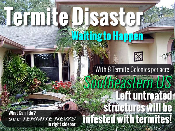 What you can do about Termites