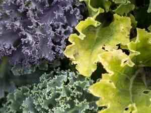 vegetables-940177_1920