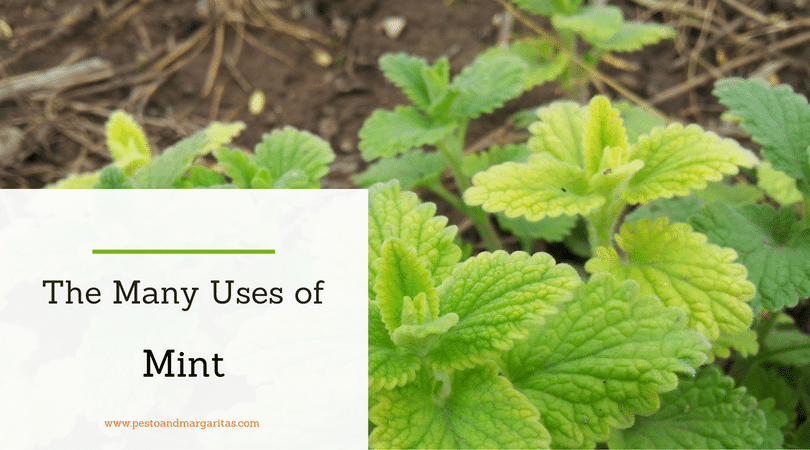 The Many Uses of Mint