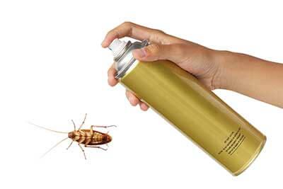 Ant Roach Control
