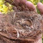 מאמר קן לציפור