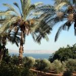 מהו שאמר בעל התהלים צדיק כתמר יפרח כארז בלבנון ישגה
