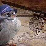 מי יתנני עוף, למה אדם מבקש לעוף?