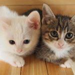 子猫のミルクの飲ませ方は?量や時間、回数、飲まない時の対処法も!