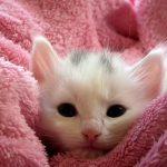 猫が鼻づまりで苦しそうな時の対処法や原因!治し方やツボってある?