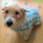 犬のレインコートのつくり方!簡単に手作りする手順を画像で紹介!無料型紙ダウンロード