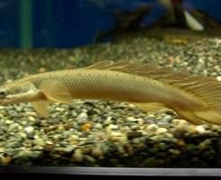 古代魚 種類