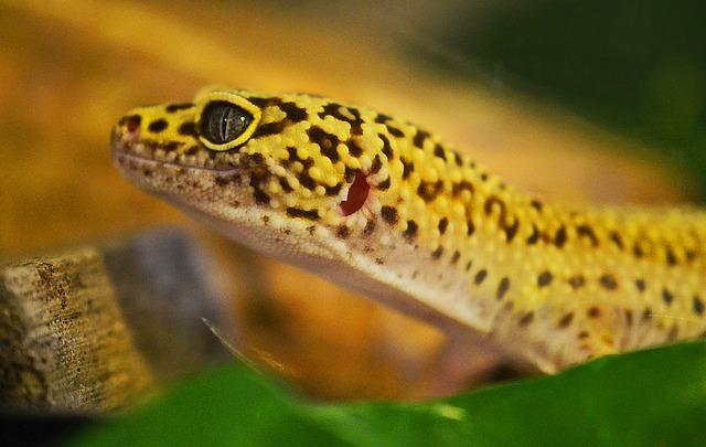 ヒョウモントカゲモドキ 舌の色 口パクパク 鼻水