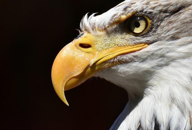 鷲 ペット 鳴き声 大きさ 種類