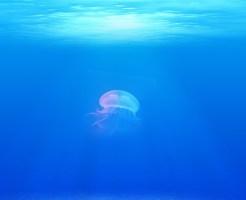 クラゲ プランクトン 構造 心臓