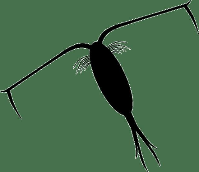 プランクトン ミジンコ 微生物 種類 餌