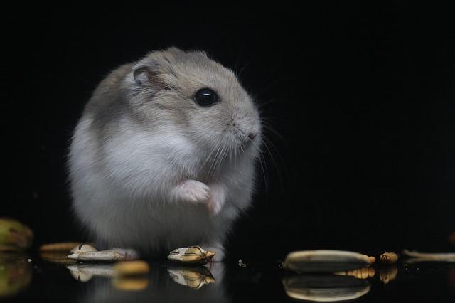 ハムスター ニキビダニ 自然 治癒 治療