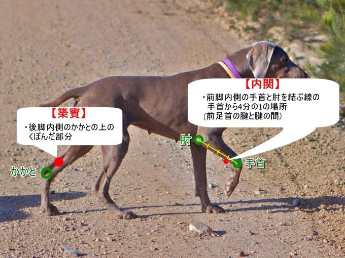 犬の車酔いに効くツボ(内関・築賓)