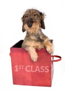 We deliver your pets gift throughout the UK. Nextday!