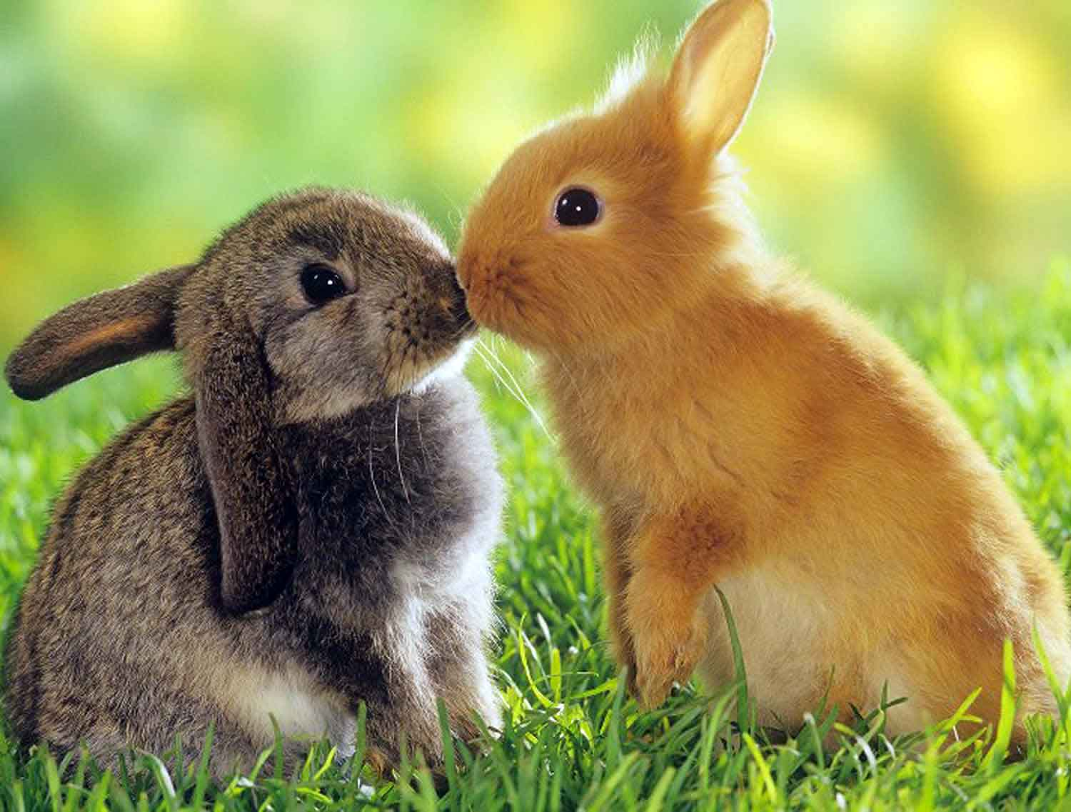 presents for rabbits and small pets