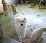 動物保護センター