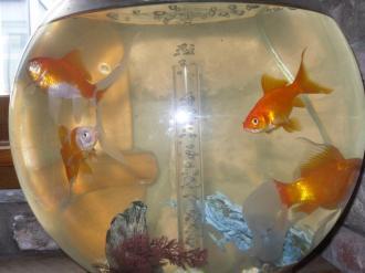 fishchipsandtartaresauce