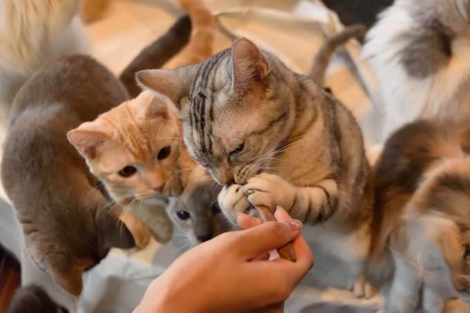 猫 餌 食べない