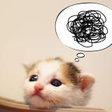その勘違い待った!誤解されやすい猫エイズについて話します。